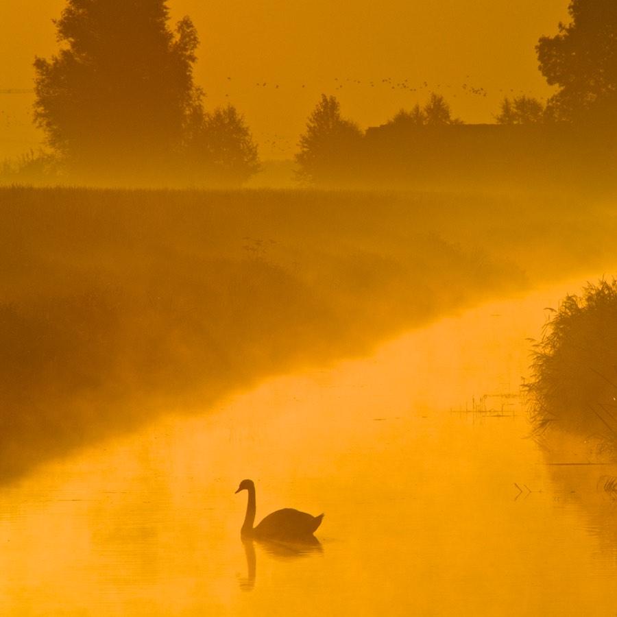 Landschapsfotografie bij Fotoschool Keistad. Foto van een zwaan in de ochtendnevel.