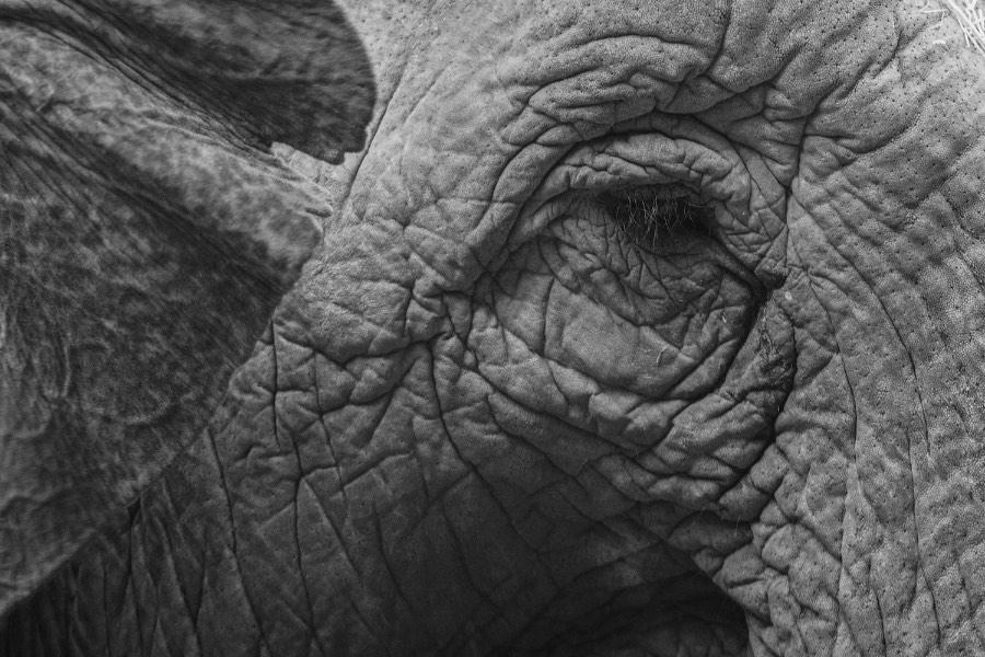 ©Beitske Kempenaar (FriesFrame) - Olifant met alleen een oog