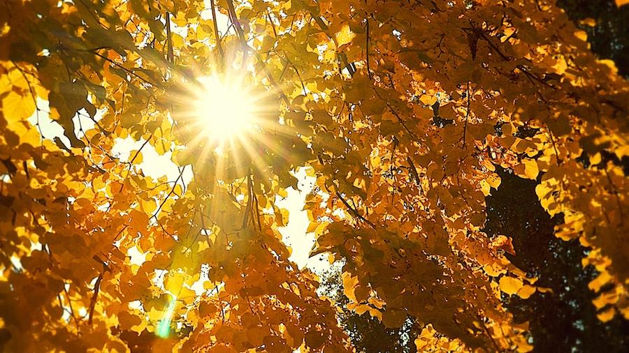 Fotoschool Keistad Fotografie in de herfst (3)