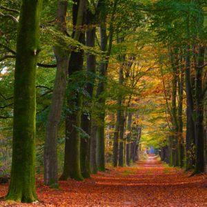 Fotoschool Keistad Fotografie in de herfst