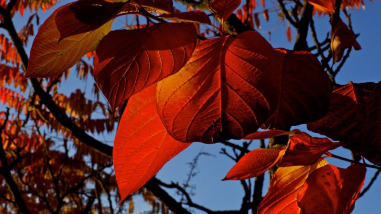 cc809897f2c132 Vijf extra tips voor fotografie in de herfst - Fotoschool Keistad