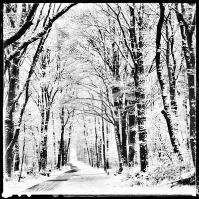 Bos-sneeuwlandschap-bewerkt