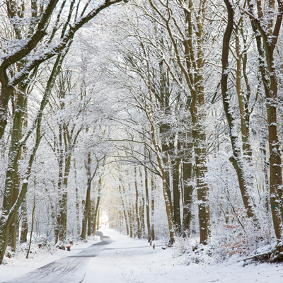 Snapseed Bos-sneeuwlandschap-origineel